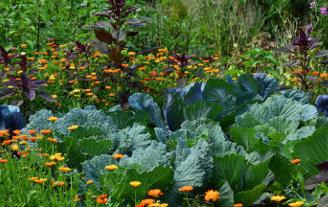 pesticides-jardiniers